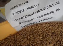 Trbf riz nerica